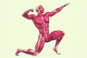 حقائق لا تعرفها عن الجهاز العضلي
